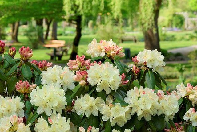 Itt a tavasz, nézzük meg a virágokat!