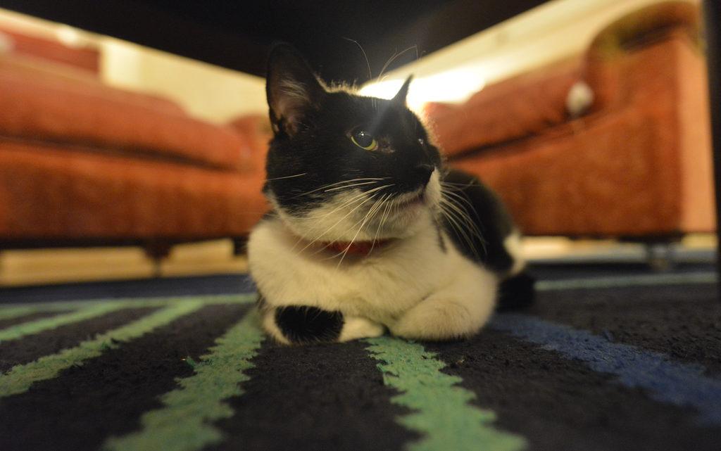 Lehet-e cicát vinni egy szállodába?